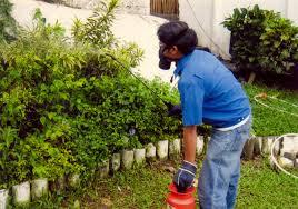 شركات رش مبيدات حشرية بالرياض