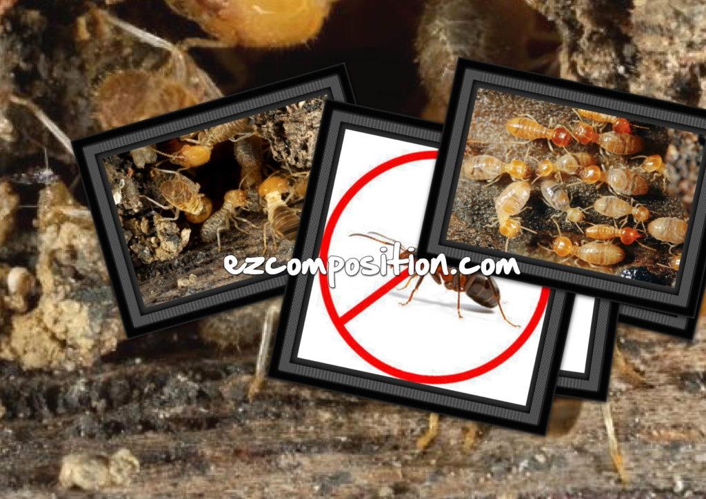 شركات مكافحة النمل الابيض بالدمام