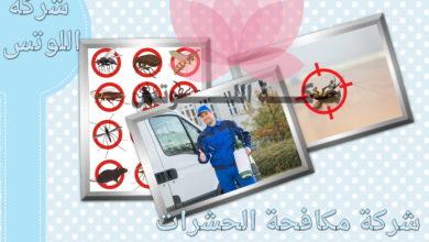 شركات مكافحة الحشرات