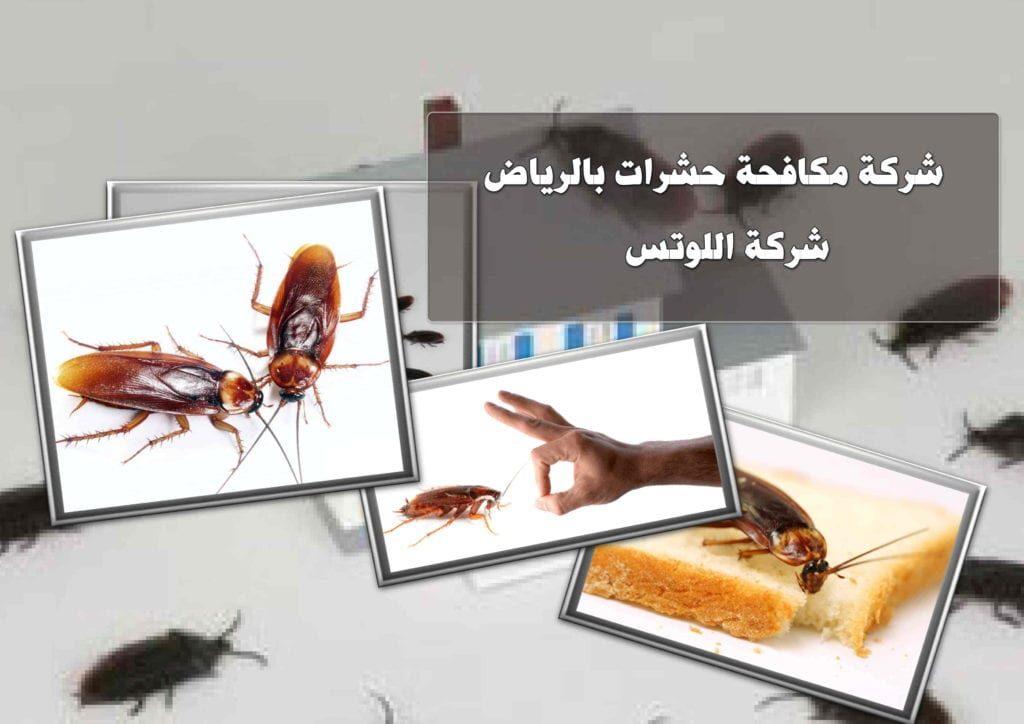 شركات مكافحة حشرات بالرياض
